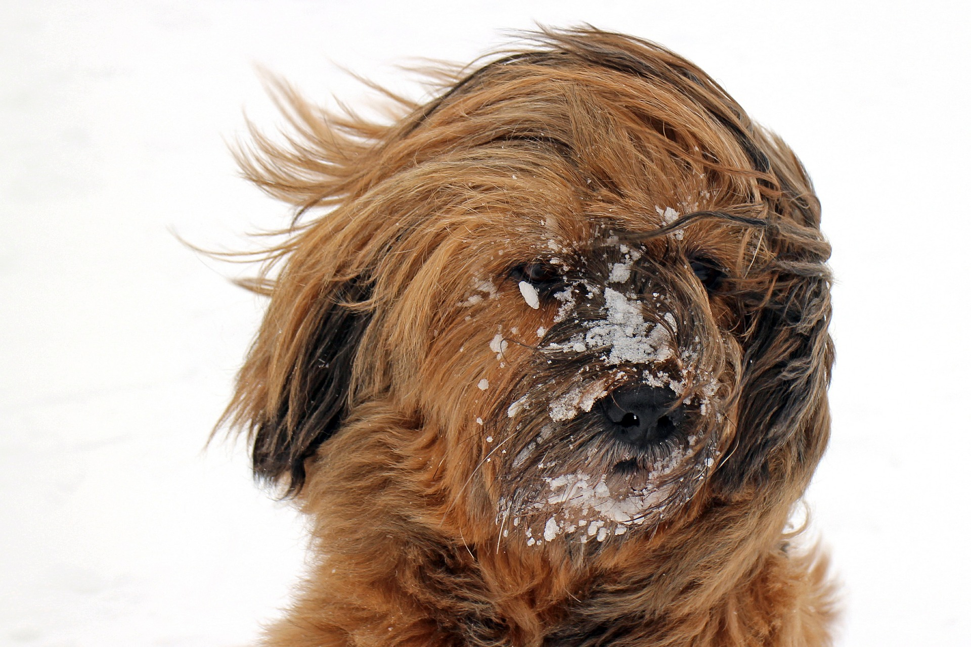 95 ways of saying 'rubbing snow in someone's face'